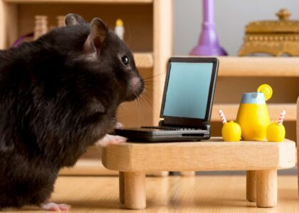 Best Talking Hamster Toys