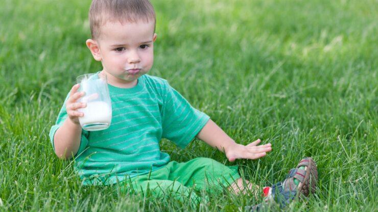 Best Organic Milk for Toddler